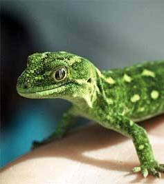 green-geckoさん